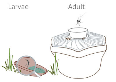 icon controlling container breeding mosquitoes